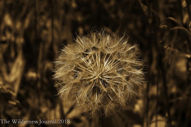 Kodak P880 DeYoung Trail Flower Seeds 6 27 17 a
