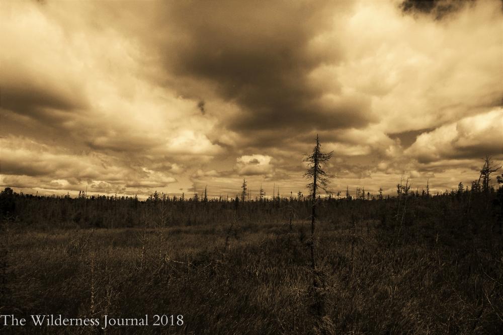 Kodak P880 Skegomog Swamp Trail 8 4 17 a