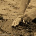 Boardman River Restoration: Planting Milkweed